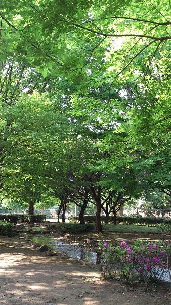 仙川公園0509.jpg